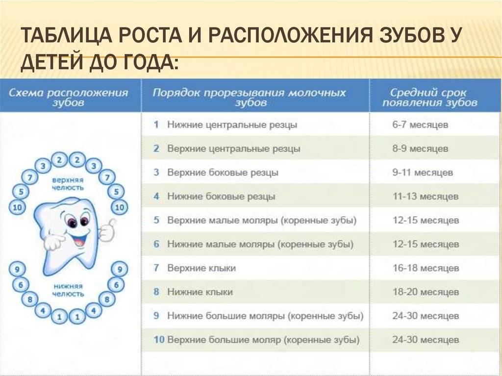 Сколько дней прорезываются первые зубы у ребенка