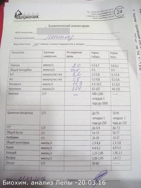 Результаты анализа крови при мононуклеозе у детей