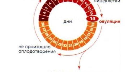 Можно ли забеременеть, если месячных нет: аменорея у юной девушки, при климаксе; возможно ли зачатие, если менструаций нет 2, 3, 4 года