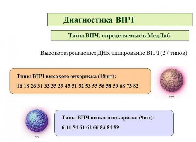Эффективность вакцинации от впч и особенности проведения