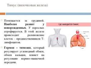 Опасная для самых маленьких патология — гипоплазия тимуса: признаки и терапия