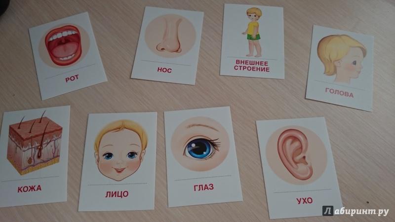Изучаем части тела с малышами: варианты игр