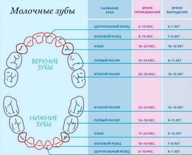 В каком возрасте режутся зубы у грудничков или могут ли резаться зубы в 3 месяца, признаки прорезывания у малышей