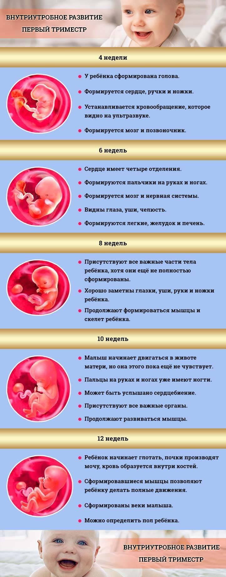 На какой неделе можно узнать по узи пол ребенка? 18 фото с 12 недели беременности можно ли определить мальчик это или девочка