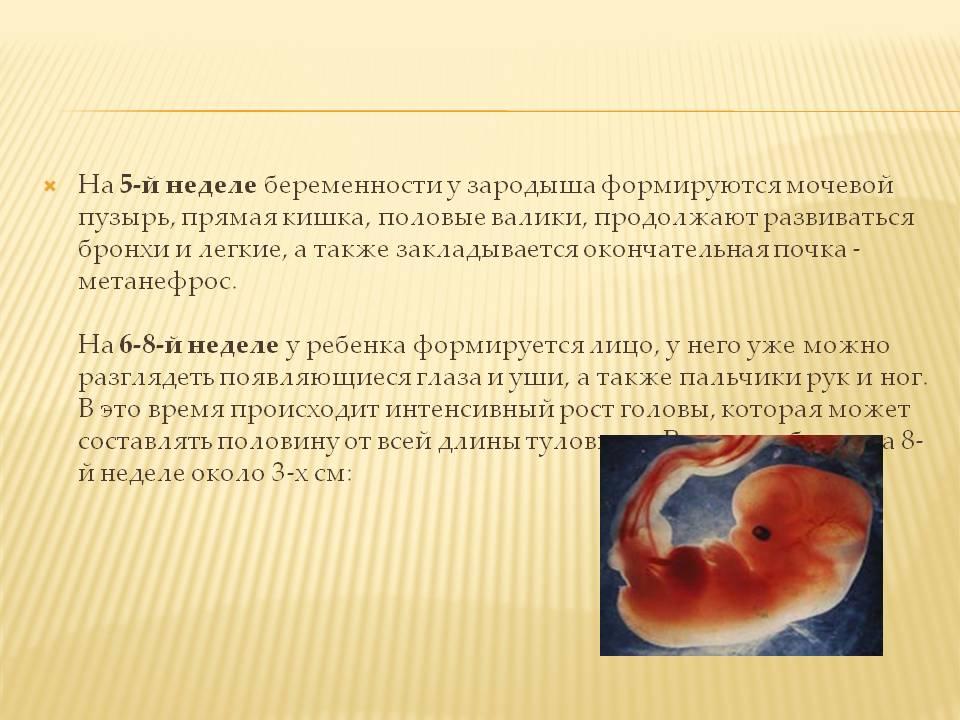 Главная причина выкидыша или замершей беременности