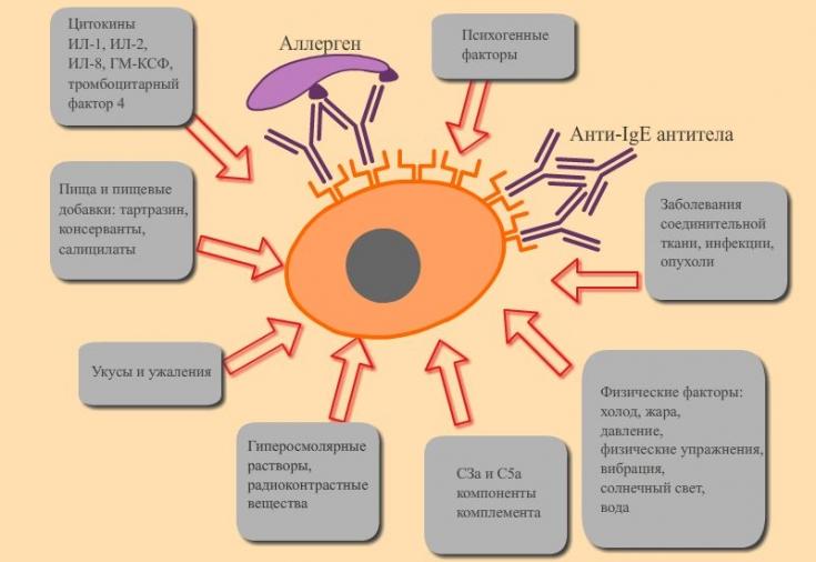 Аллергия и методы ее профилактики у детей. диатез и аллергия у детей