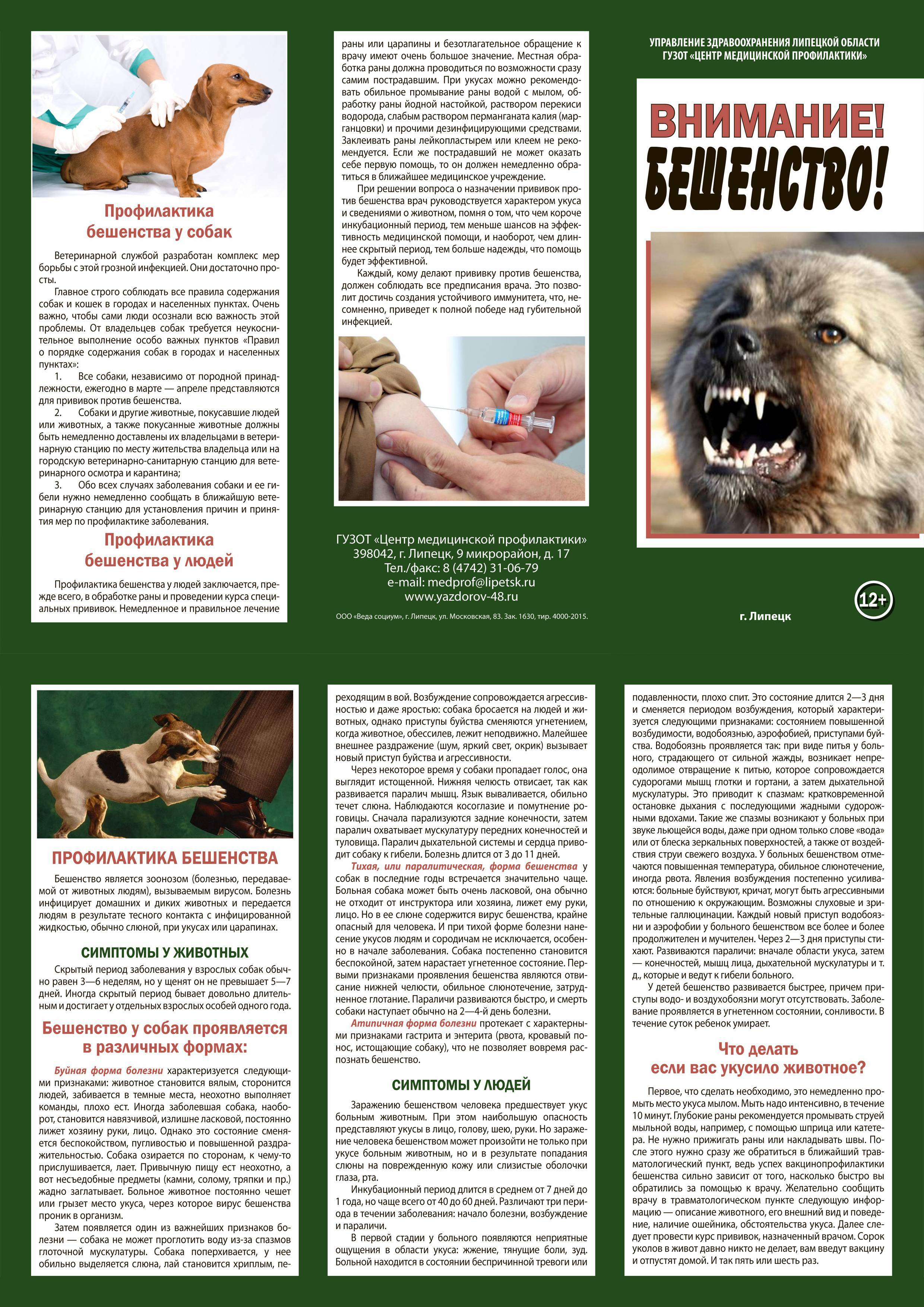 Если ребенка укусила собака, что делать? применение лекарственных препаратов и особенности лечения
