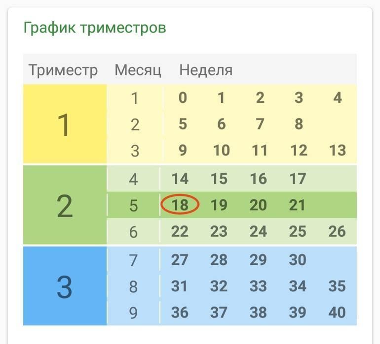 Какая неделя беременности какому месяцу и триместру соответствует? таблица – когда начинается первый, второй и третий триместры