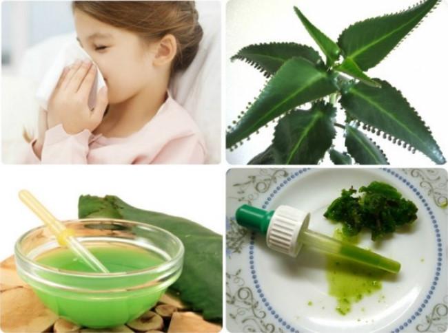 Народные средства от насморка для детей: безопасные рецепты