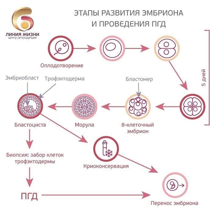 Эко с донорскими эмбрионами  | проблемы мужского и женского бесплодия и методы их решения