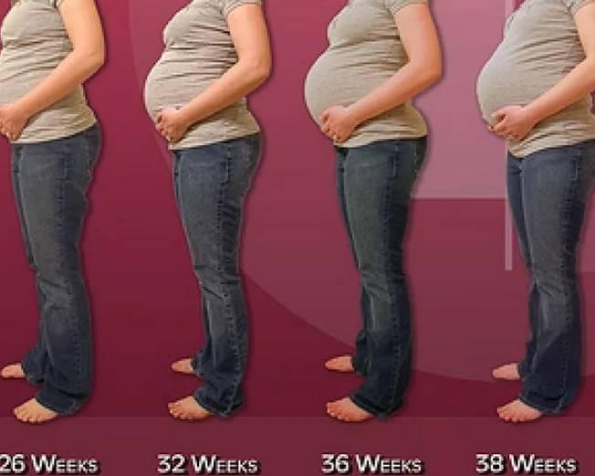 Как меняется живот во время беременности фото | все о беременности
