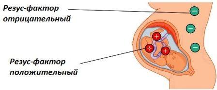 Резус-конфликт при беременности: таблица по группам крови матери и плода, что это такое, последствия несовместимости после рождения, симптомы и профилактика, прививки