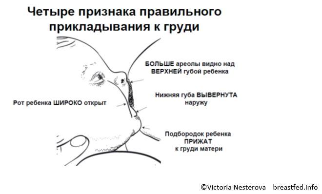 Правильное прикладывание ребенка к груди. - новорожденный. ребенок до года