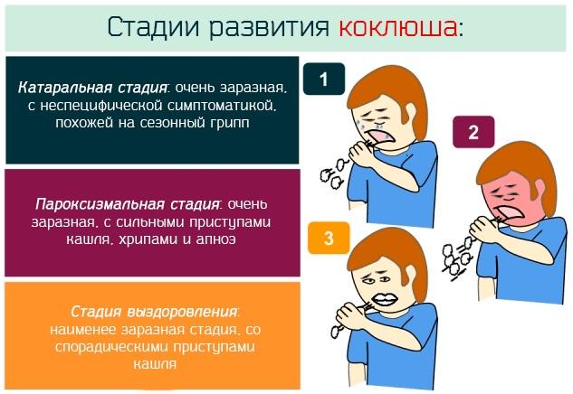 Коклюш у детей: симптомы, лечение, профилактика народные физиотерапевтические средства самолечение доктор комаровский рассказывает стадии болезни