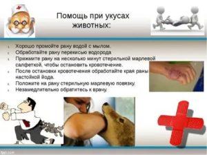 Первая помощь при укусе собаки: алгоритм действий