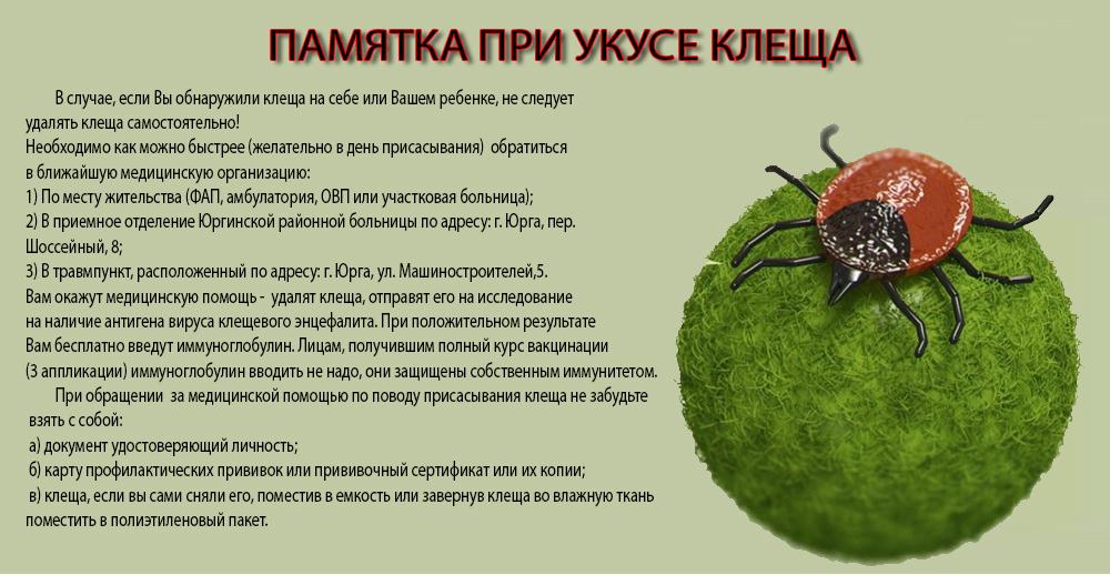 Что делать, если укусил клещ » энцефалит.ру