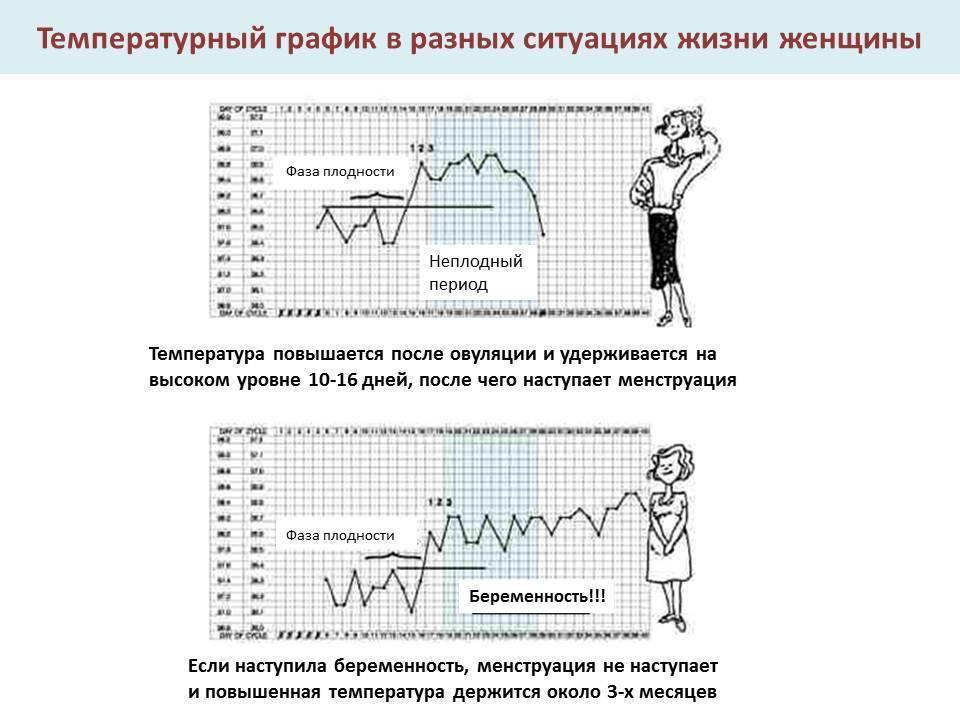 Базальная температура при беременности на ранних сроках до задержки (10 фото): график, как измерить и какая она должна быть при беременности