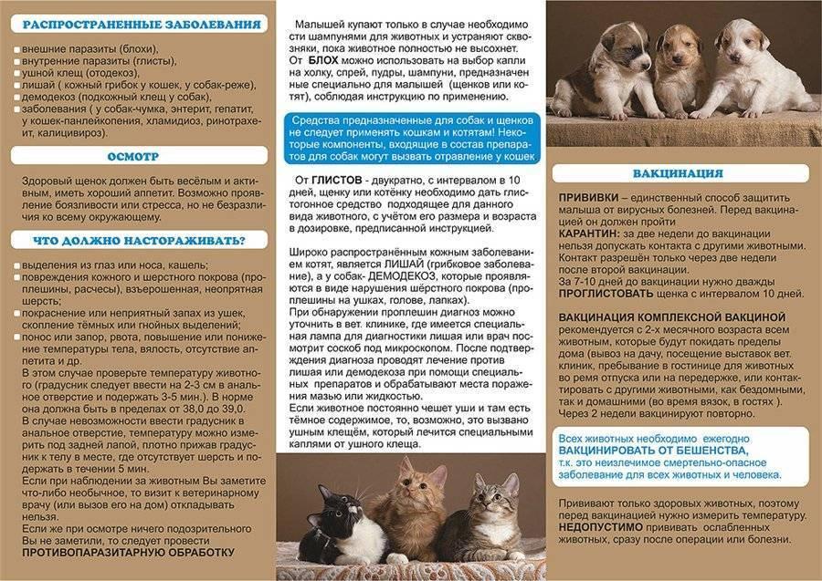 Питомец для ребенка: правила выбора и советы по уходу. какое животное завести в квартире для ребенка кого лучше завести ребенку из животных