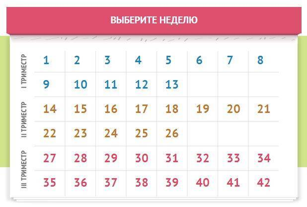 Календарь беременности - рассчитать свой календарь беременности по неделям с фото