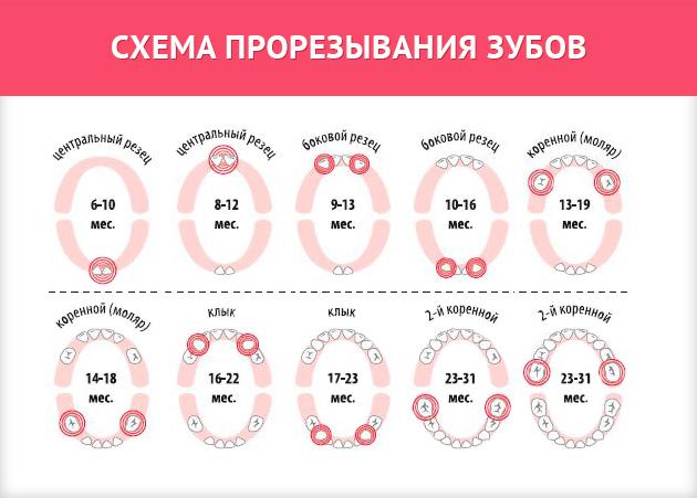 Температура при прорезывании зубов у детей после года