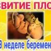 39 неделя беременности: какие выделения, вес и шевеления ребенка, предвестники родов / mama66.ru