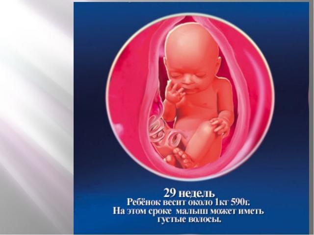 29 неделя беременности: как чувствует себя будущая мама и малыш