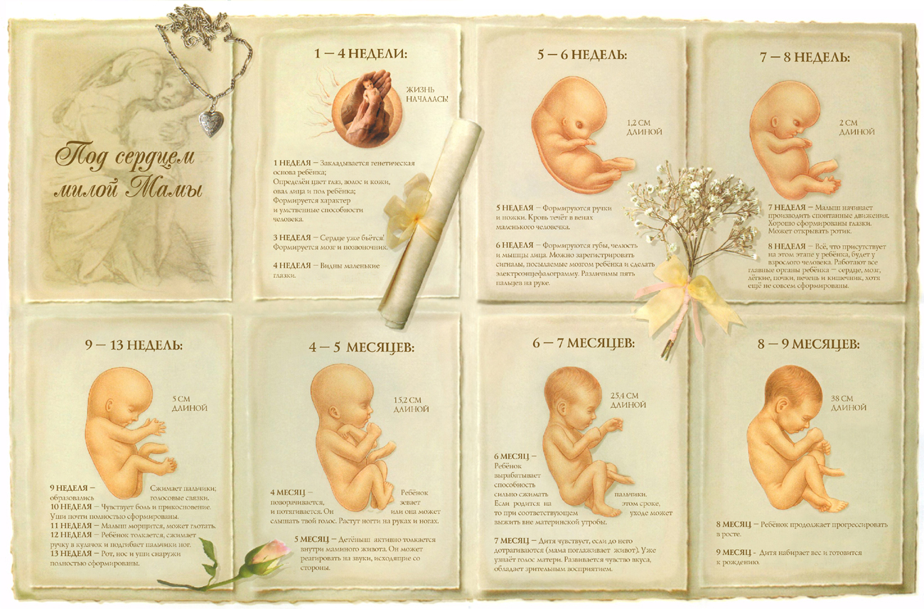 Учись, малыш: 10 правил, как развивать ребенка во время беременности