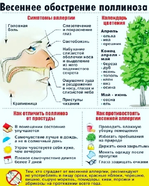 Поллиноз: симптомы и лечение   профилактика поллиноза и его причины