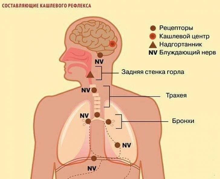 Кашель на нервной почве – как избавиться от спазмов