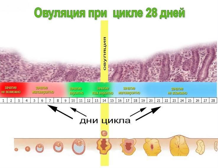 Выделения после овуляции (15 фото): какими они должны быть и что означают кремообразные, желтые, розовые или жидкие водянистые выделения?
