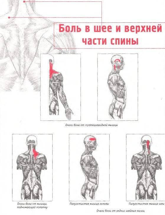 У ребенка болит шея: причины боли сзади, спереди, с левой или правой стороны