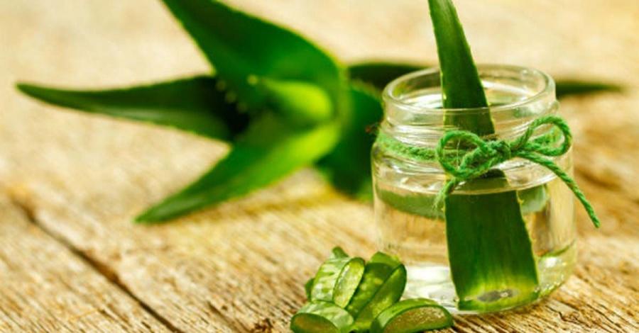 Алоэ от насморка в носу: свойства, противопоказания, рецепты из сока и листьев, и как приготовить в домашних условиях и помогает ли при лечении взрослых и детей?