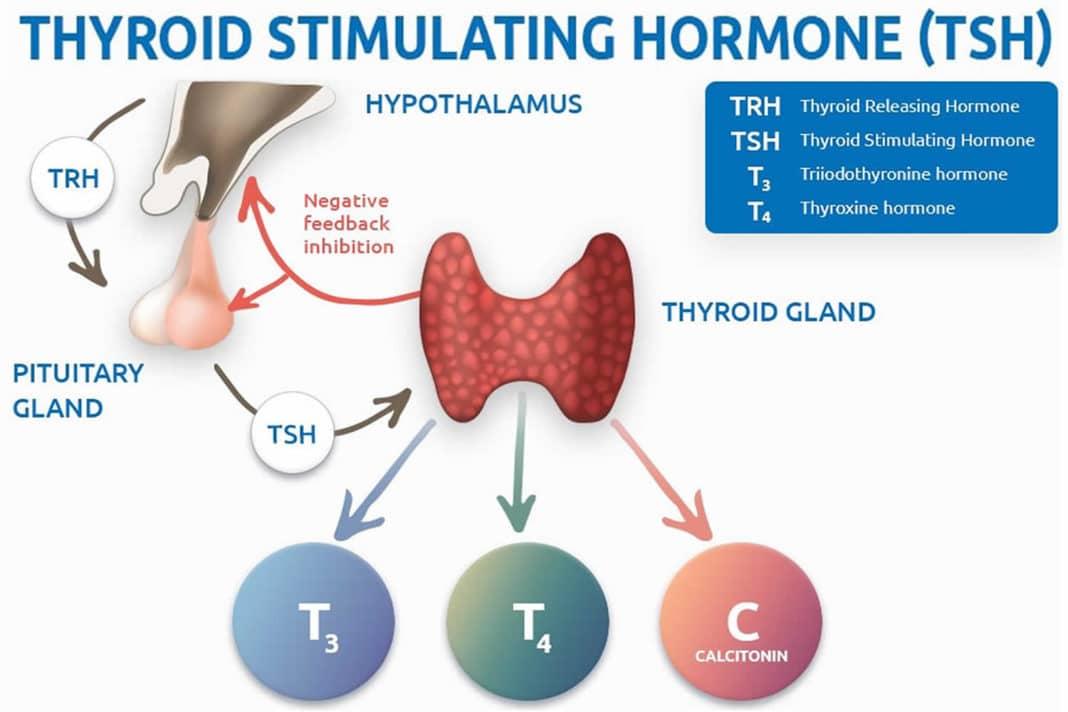 Анализ крови на пролактин. норма, причины повышения и снижения уровня гормона. как подготовится к тесту?