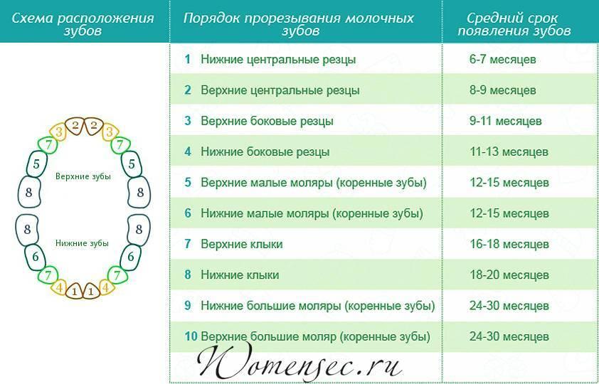 Таблица прорезывания молочных зубов по месяцам   здоровье зубов
