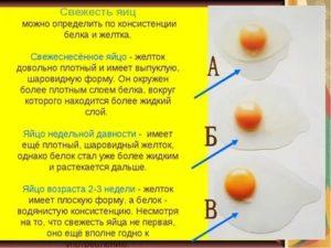 Желток для грудничка: когда начинать первый прикорм и как давать желток 7-месячному ребенку