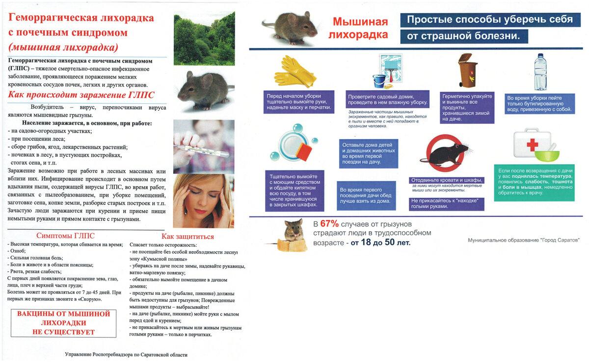 Мышиная лихорадка: первые признаки заболевания у детей и принципы лечения