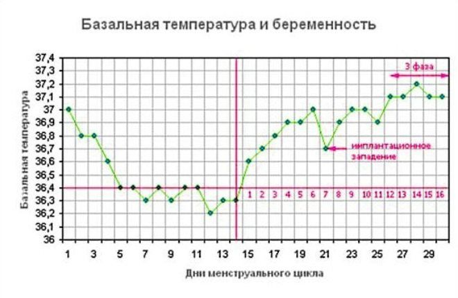 Температура тела - важный показатель состояния беременной женщины