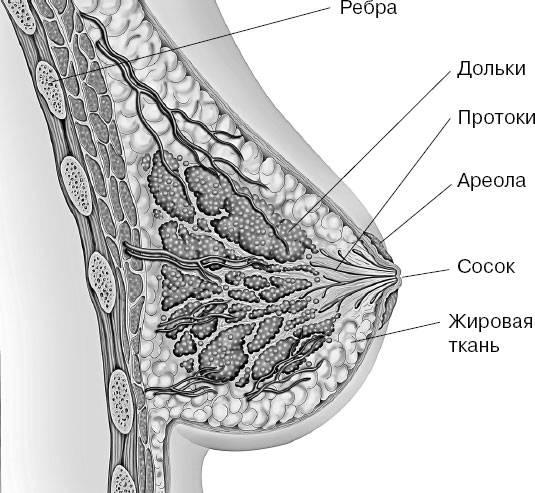 Состав грудного молока - топотушки