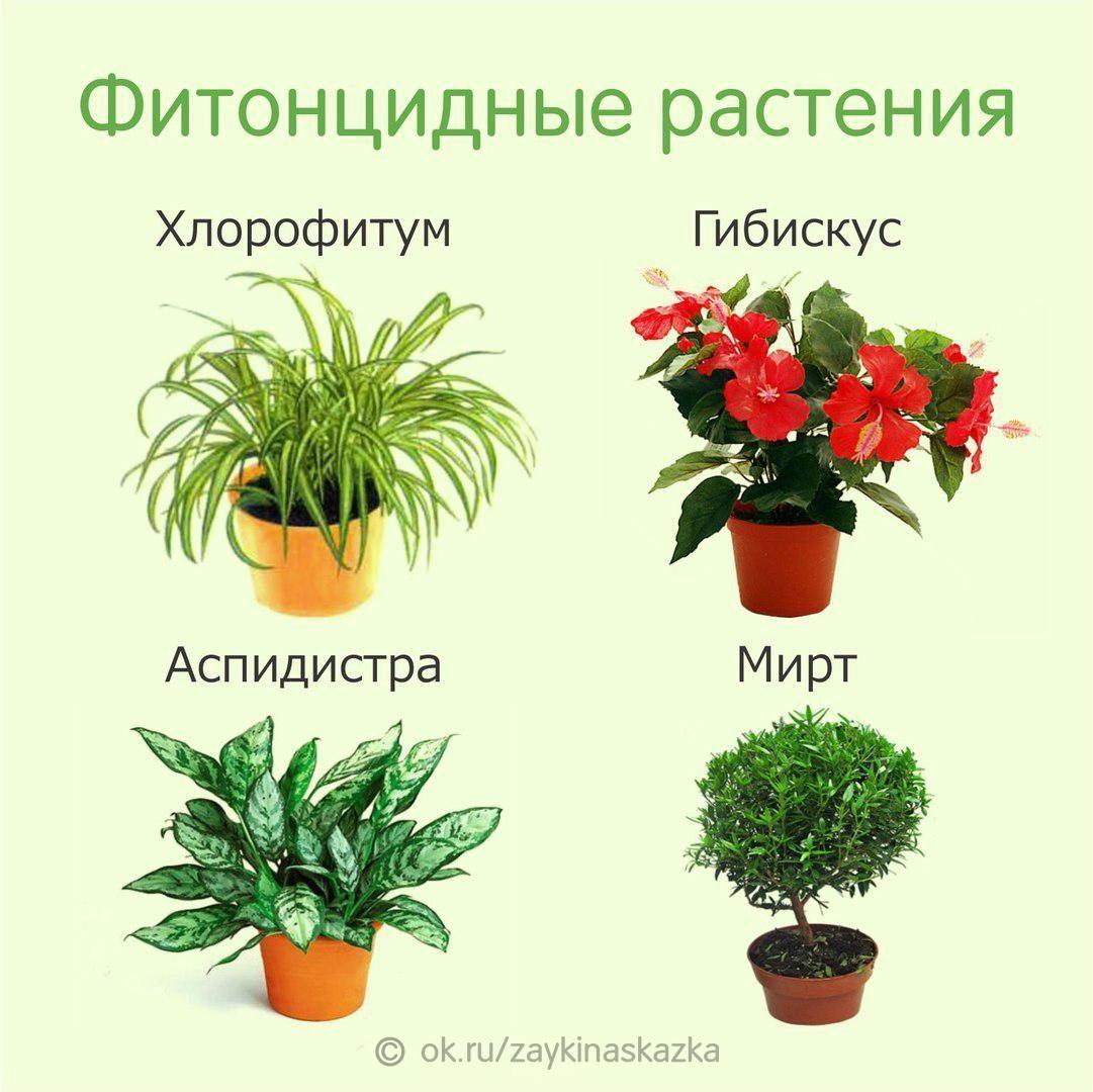 Какие цветы обязательно должны быть в доме (с фото)
