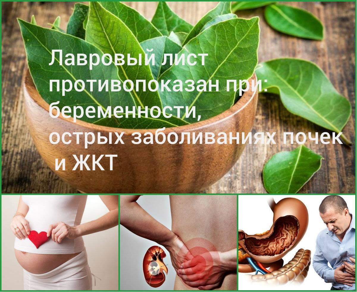Лавровый лист для прерывания беременности: рецепт, как прервать на раннем сроке с помощью отвара и последствия такого аборта