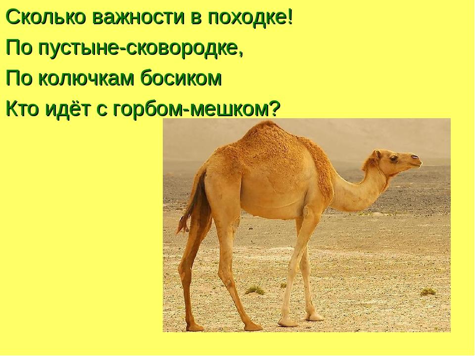 Для чего верблюду нужен горб. как объяснить ребенку 3-5 лет зачем верблюду горбы