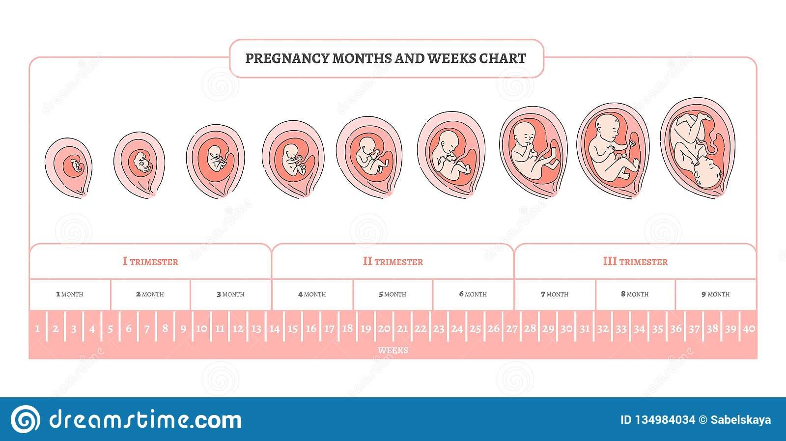 Три шага к встрече с чудом – три триместра беременности