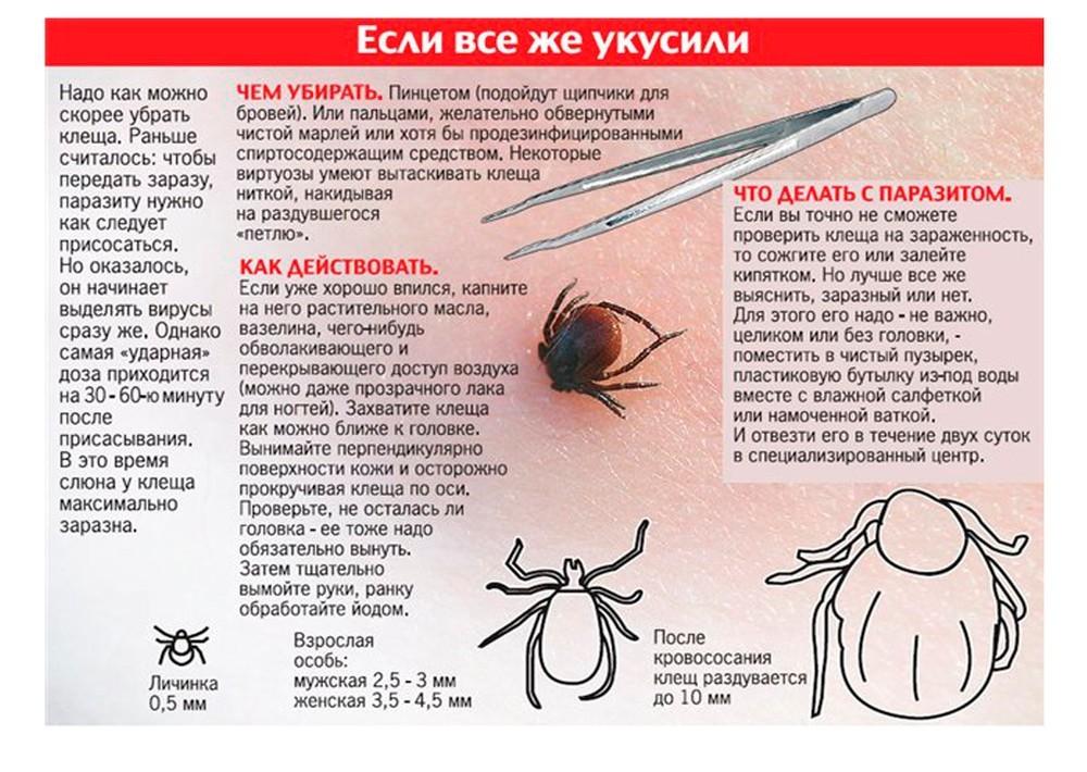 Ребенка укусил клещ: что делать в домашних условиях, фото укуса, советы доктора комаровского