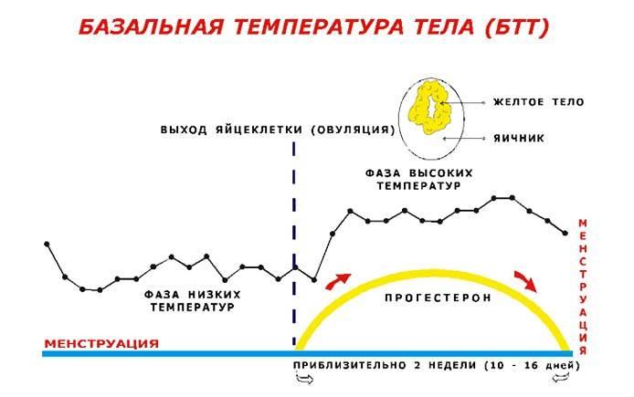 Какой должна быть базальная температура перед месячными?