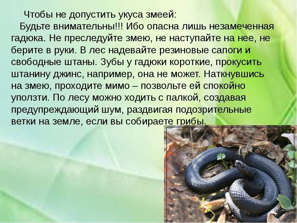 Если вас укусили. помощь при укусах насекомых, змей, животных  . первая помощь при укусах животных