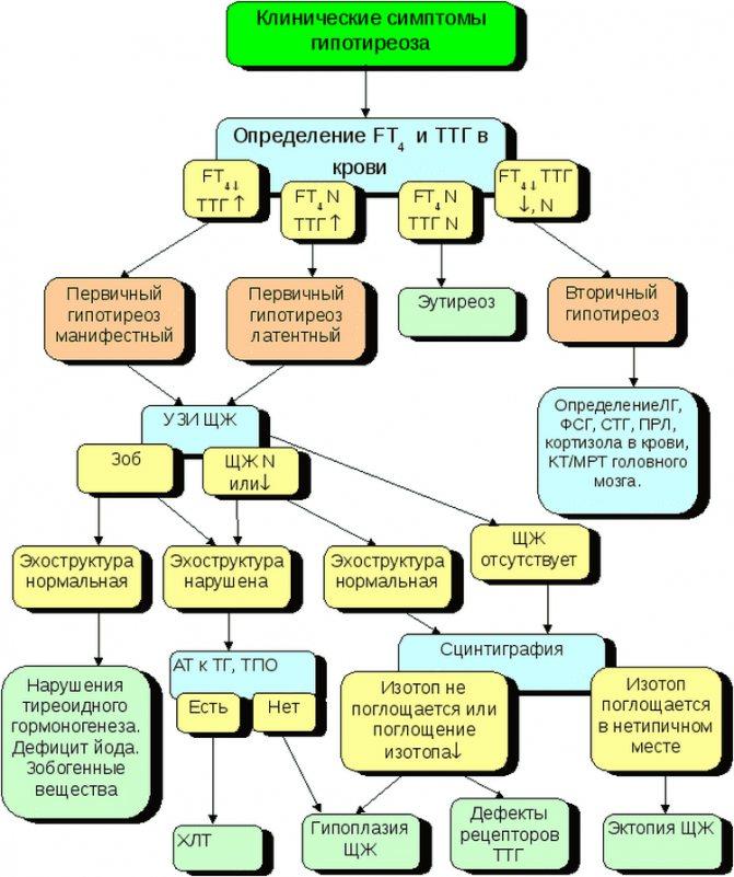 Врожденный гипотиреоз у детей: признаки, фото, лечение, профилактика