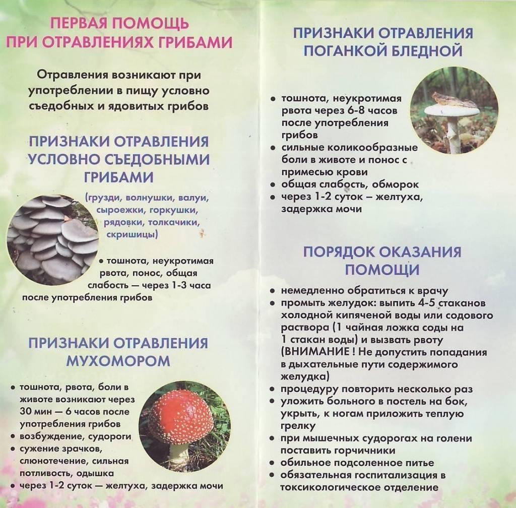Что принимать при лечении грибного отравления