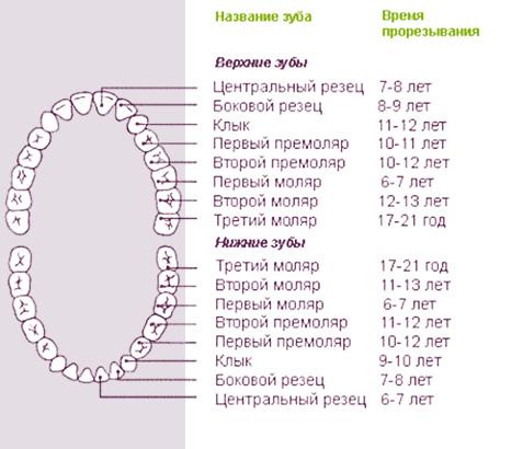 Когда и как у детей меняются молочные зубы на коренные