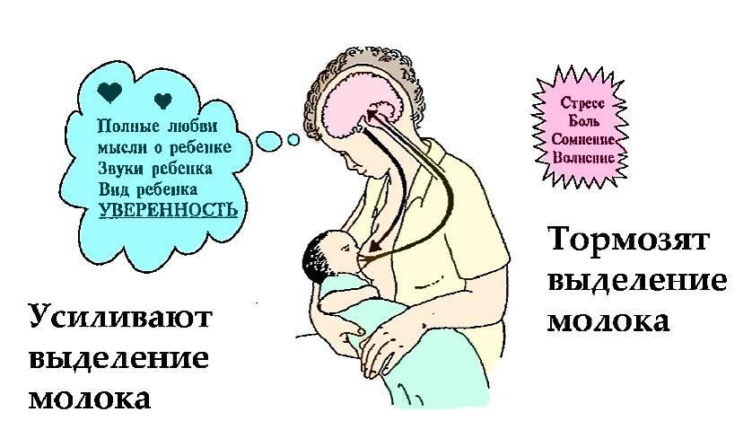 Когда после родов появляется молоко? что влияет на этот процесс?