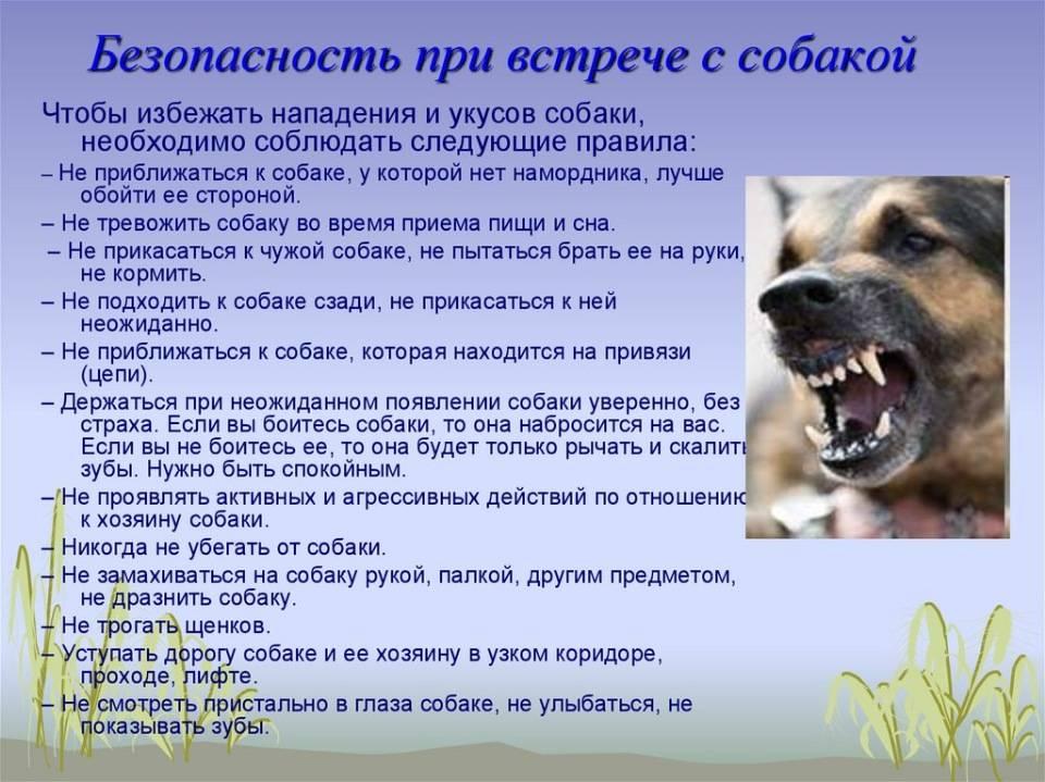 Алгоритм действий при укусе собаки